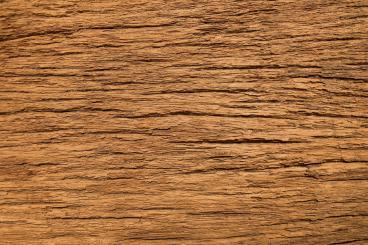 Light rugged timber