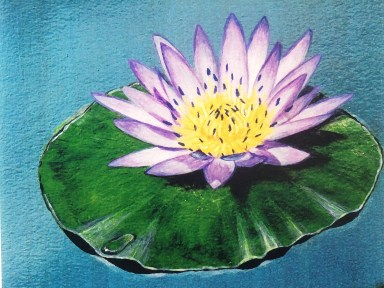 Water lily painting by David Clode.