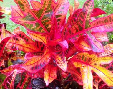 Croton 2.