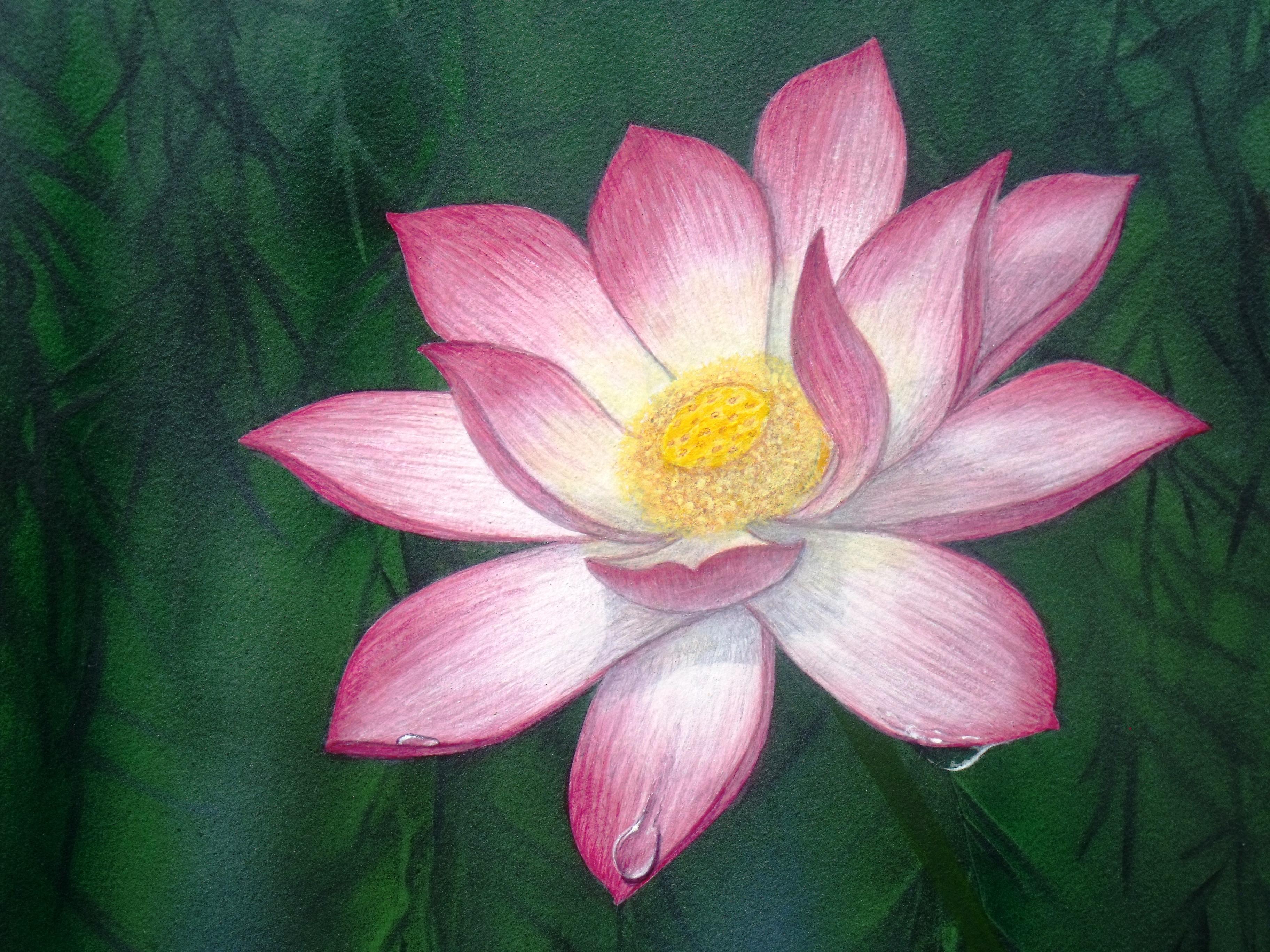Lotus Flower Art Water lily Pain...
