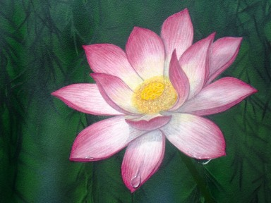 Sacred Lotus Lily.Tracts4free.WordPress.com.