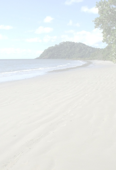 Pale background. Cape Tribulation beach, Australia.