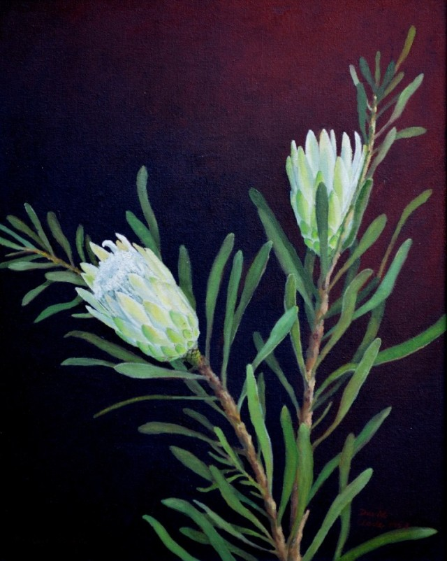 Pale green form of the sugarbush protea, Protea repens. Oil painting by David Clode.