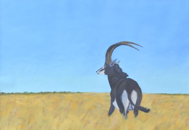 Sable antelope. Oil painting by David Clode.