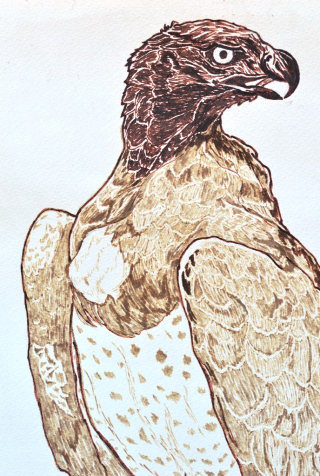 Martial Eagle by Sian Butler.