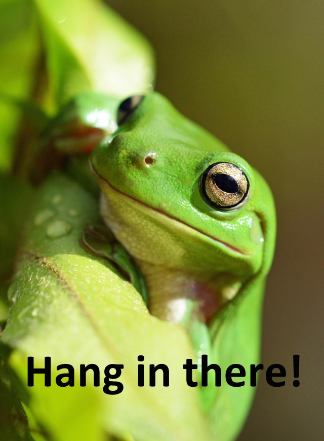 """Hang in there!"". Frog poster by David Clode."