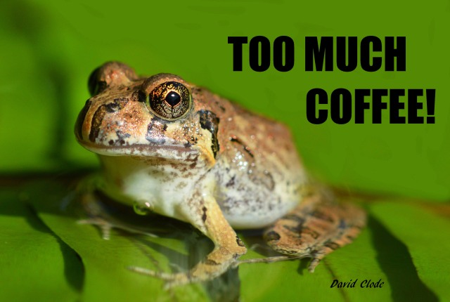"""Too Much Coffee!"". Frog poster by David Clode."