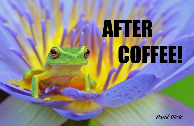 """After Coffee!"". Frog poster by david Clode."