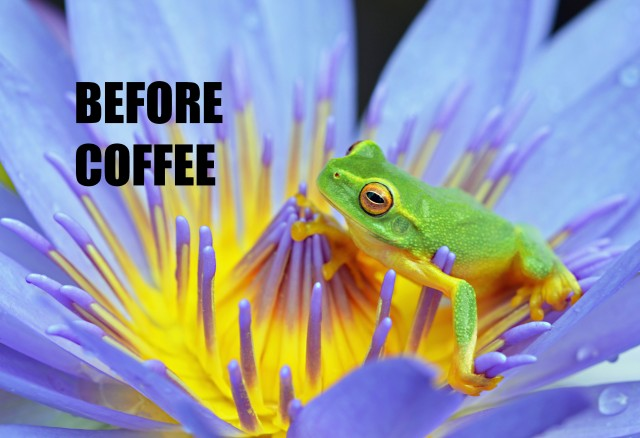 """Before Coffee"". Frog poster by David Clode."