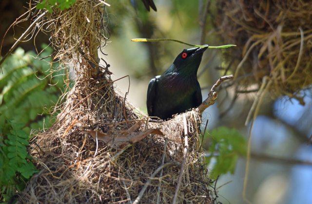 Nest builder.