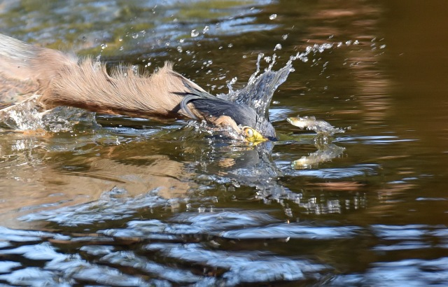 """The one that got away!"". Photo: Saltwater Creek, David Clode."