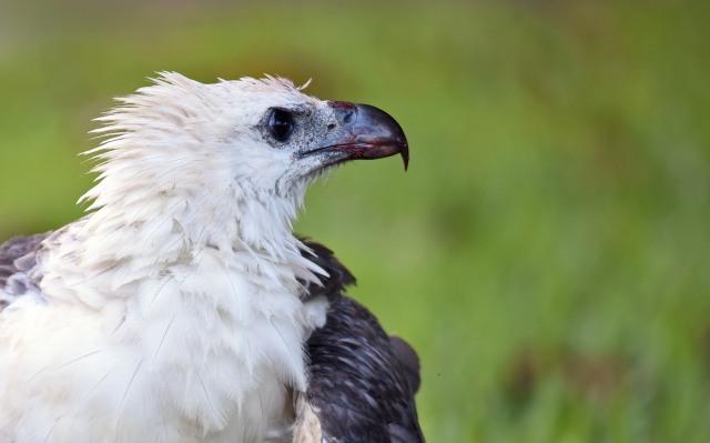 Eagle portrait. Photo: David Clode.