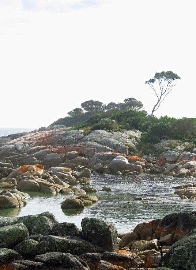 """Lone Eucalypt"". Binalong Bay. Photo: David Clode."
