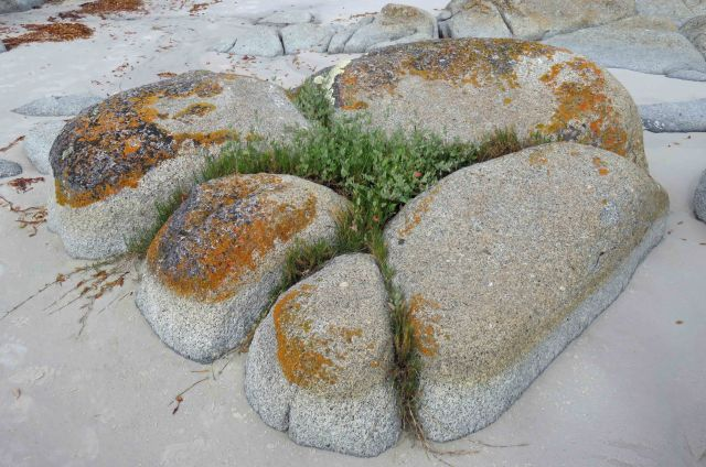 Rock garden, Bay of Fires, Tasmania. Photo: David Clode