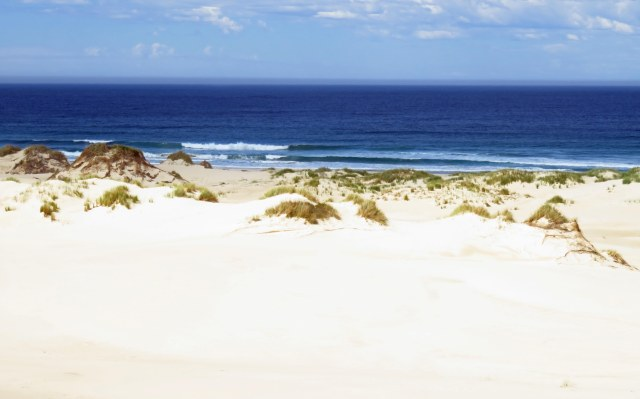 Peron Dunes, near steiglitz/St Helens, Tasmania. Photo: David Clode.