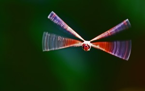 Flying dargonfly. Enhanced in Photoshop Elemnts. Photo: David Clode.