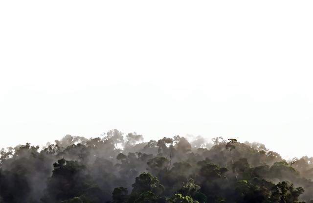 Misty Rain Forest - David Clode.