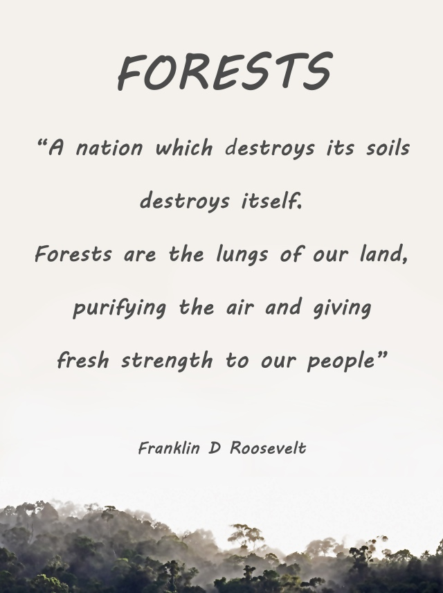 Forests poster by David Clode.