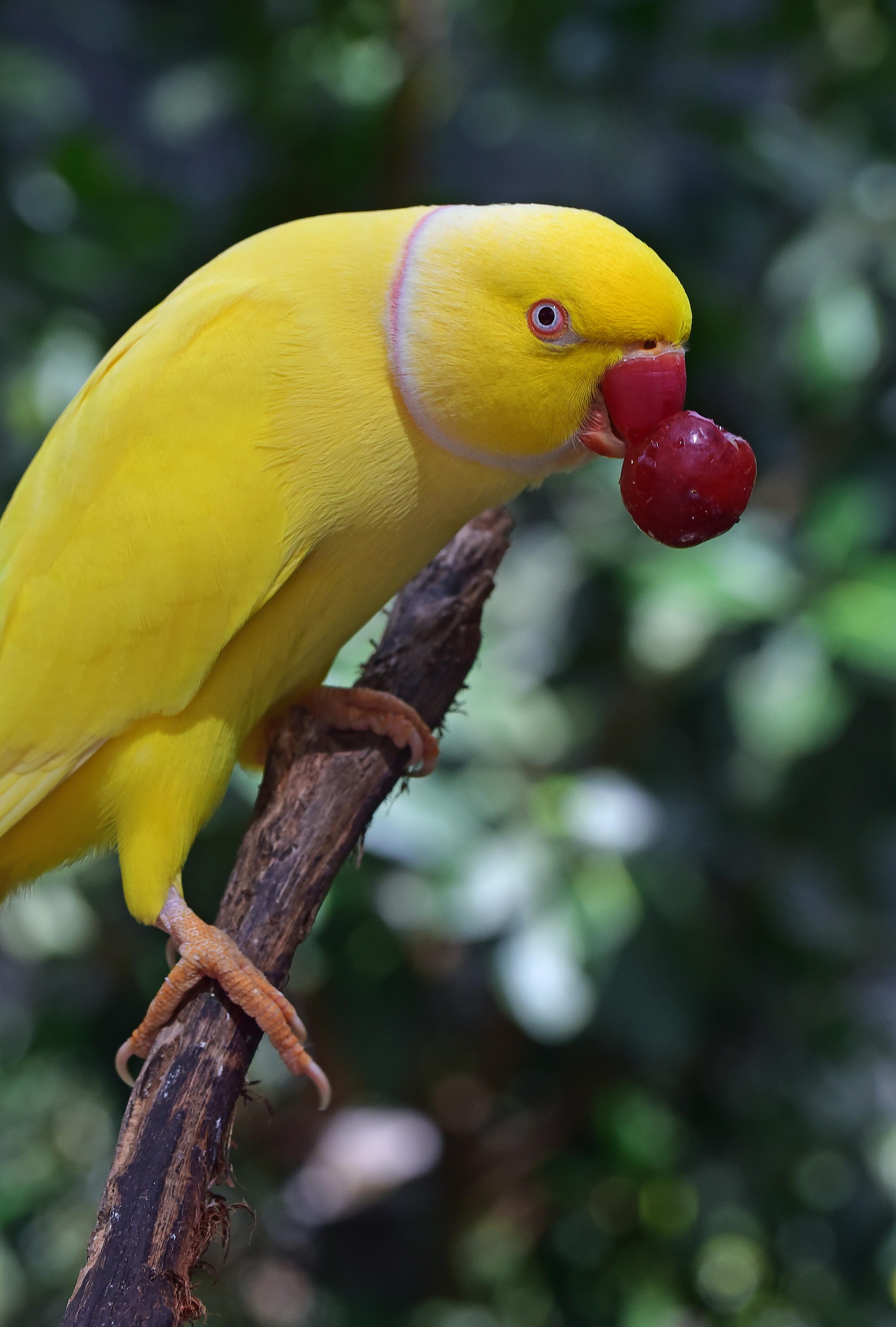 Photos Exotic Birds | Tracts4free