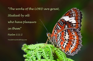 """The works of the LORD are great"" Bible verse poster. Photo and poster by David Clode."