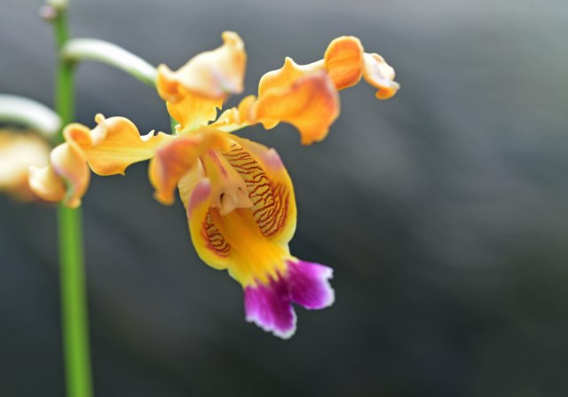 Orchid photo. David Clode.