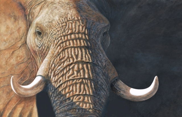 Elephant portrait. painting by David Clode.