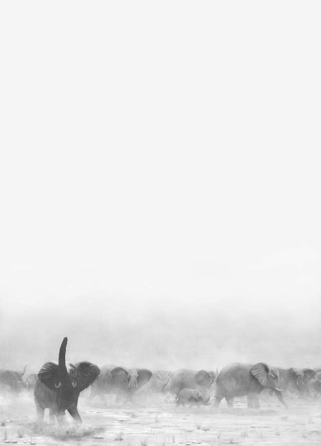 Elephant herd background (black and white). from a painting by David Cloide.