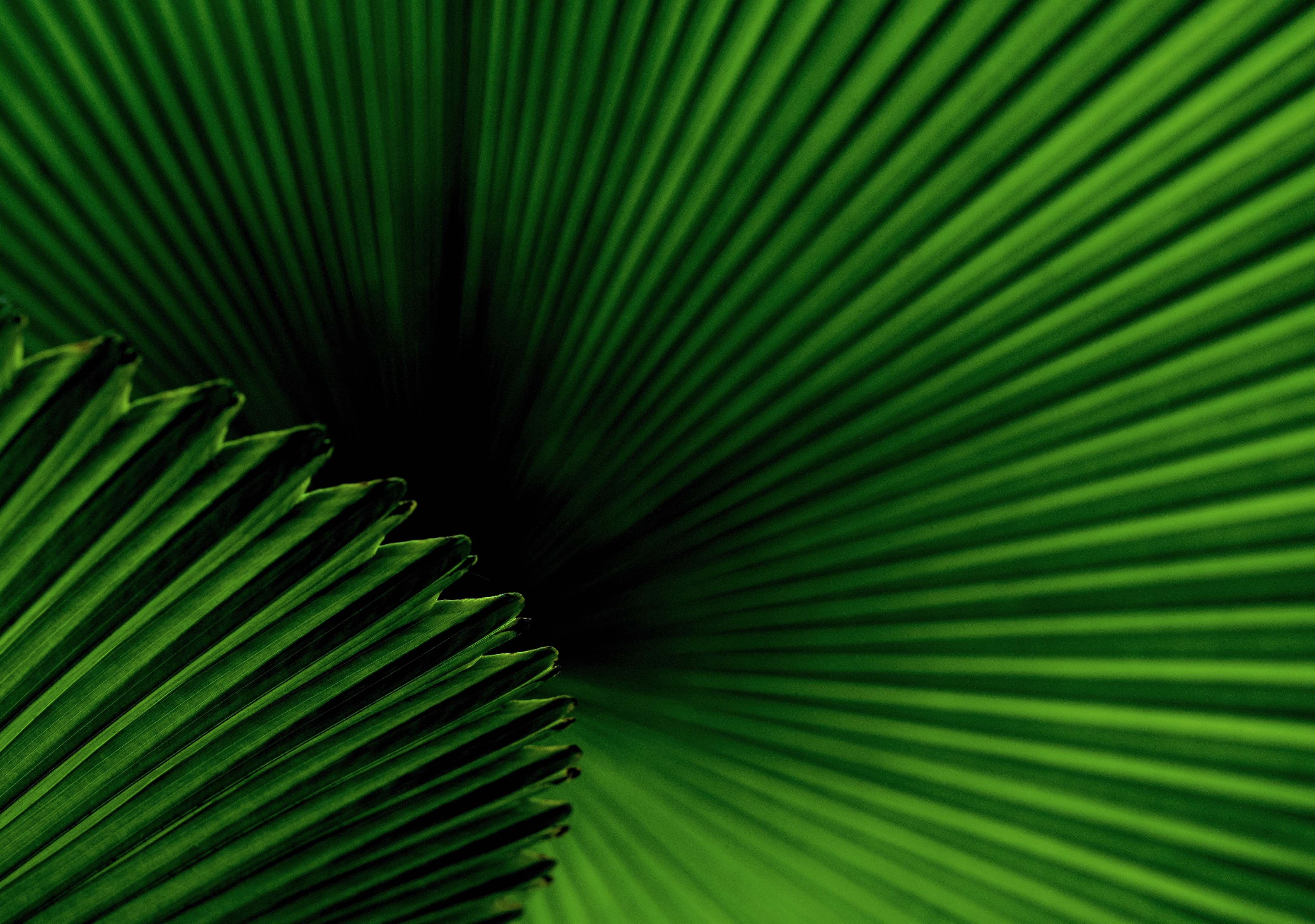 Photos Tropical Flowers Palm Leaves Tracts4free